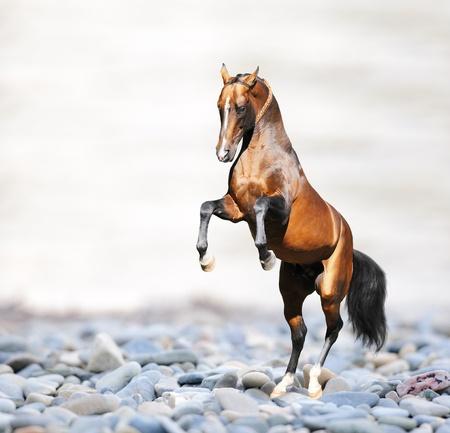 Bay akhal-teke horse on the rocks on the sea, collage photo