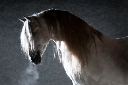 White horse portrait on the dark background photo