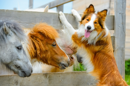horse in snow: pony and Border Collie dog are dating