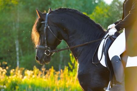 free riding: Cavalcando il cavallo nero nel tramonto Archivio Fotografico