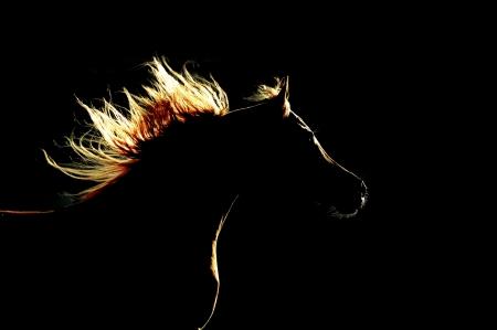 arabian horse silhouette on the dark background Stock Photo