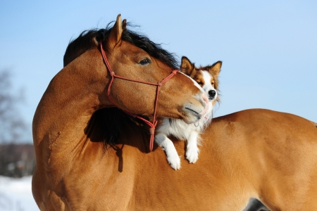 horse in snow: Red horse and dog are friends