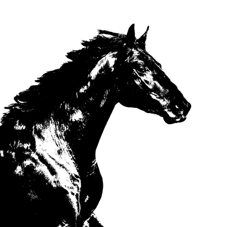 Black horse illustration on the white background illustration