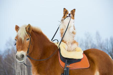 Rode hond op het rode paard