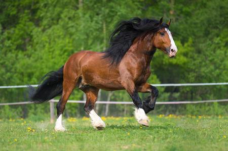 Vladimir projet de cheval court galop sur la prairie à l'heure d'été Banque d'images - 31038908