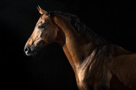 caballo negro: Caballo rojo en la noche bajo la lluvia, lanzamiento del estudio Foto de archivo