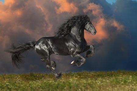 friesian: Black Friesian horse runs gallop on the dark sky background Stock Photo