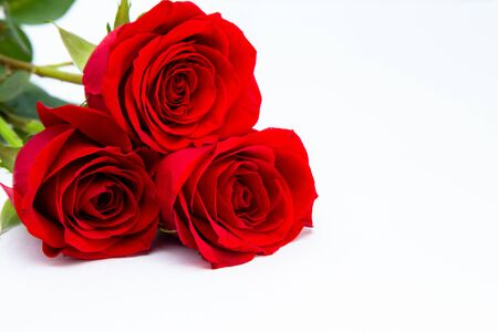 Three red roses isolated on a white background. postcard Foto de archivo