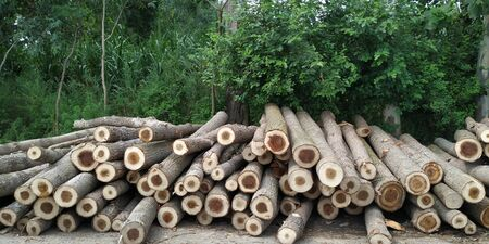 Deforestation is major factor of global global warming and spoil the eco cycle of environment. 스톡 콘텐츠