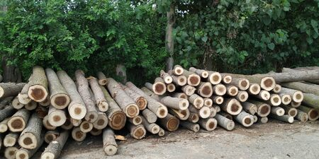 Deforestation is major factor of global global warming and spoil the eco cycle of earth