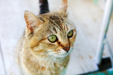 tabby cat head cat looks big cats eyes young cat homeless good cat Stock Photo