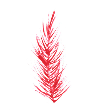 one bird feather, Illustration of feathers red bright colorful