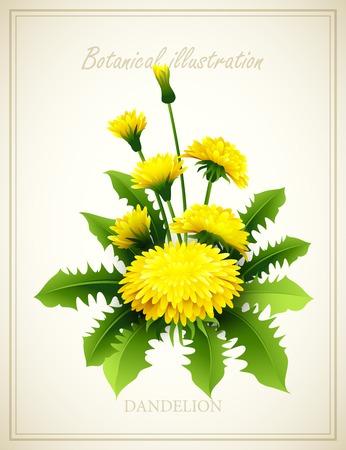 dandelion flower: Dandelion Flower vintage vector illustration Illustration