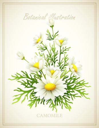 Chamomile Flower vintage vector illustration