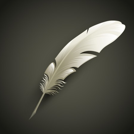 quill pen: White Feather. Vector object illustration