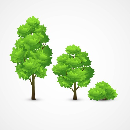 oak wood: Illustration of a set of different trees. Vector illustration EPS 10 Illustration