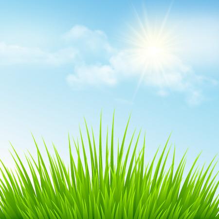 green grass: Green grass and blue sky