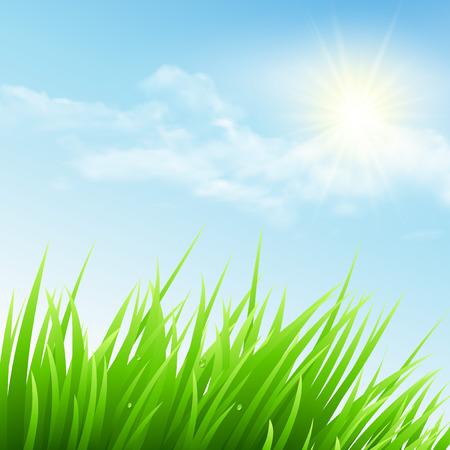 cielo azul: Hierba verde y cielo azul