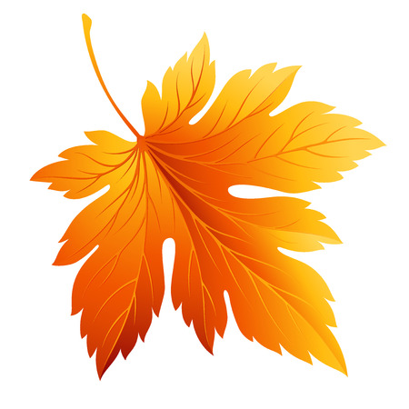 Fall leaf isolated on white