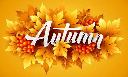 autumn colors: Autumn typographic of Fall leaves
