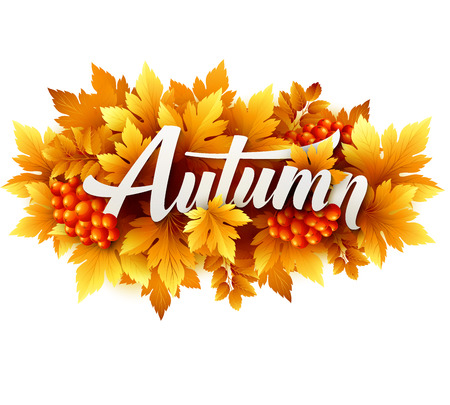 Autumn typographic of Fall leaves