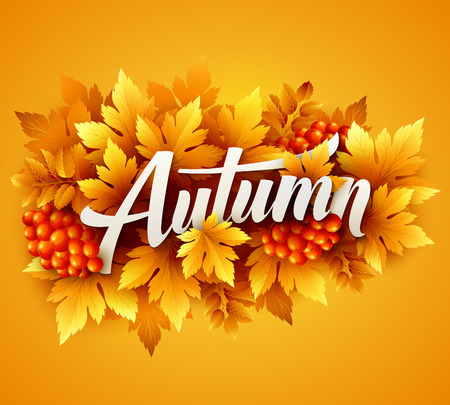 fall leaves: Autumn typographic of fall leaves