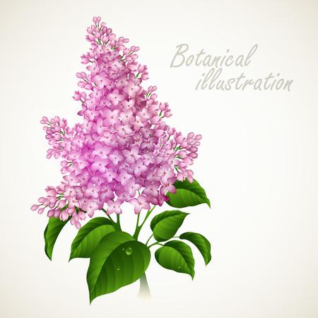 Botanical illustration vintage floral card
