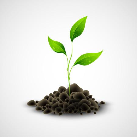 sapling: Plant sapling growing. Vector illustration