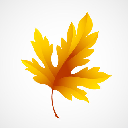 vector illustration: Fall leaf isolated in white. Vector illustration  Illustration