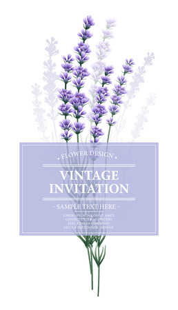 lavander: Vintage card with lavender flower.