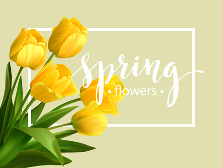 spring season: Spring text with  tulip flower. Illustration