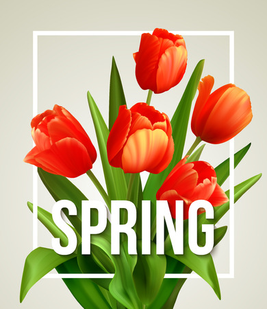 spring flower: Spring text with  tulip flower. Vector illustration EPS10