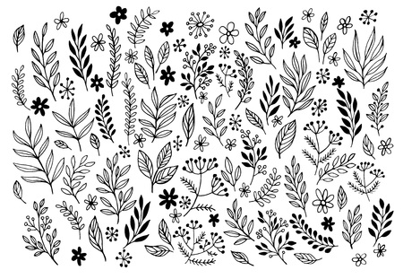 nature pattern: Set of sketches and line doodles  hand drawn design floral elements. Vector illustration EPS10