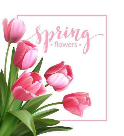 tulips isolated on white background: Spring text with  tulip flower. Vector illustration EPS10