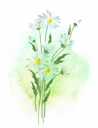 chamomile flower: Watercolor background and chamomile flower. Vector illustration EPS10