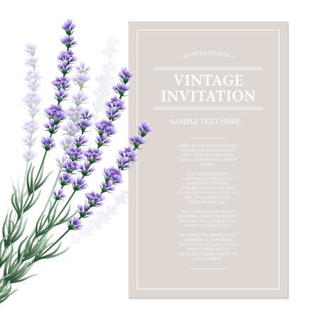 fragrant bouquet: Vintage card with lavender flowers. Vector illustration EPS10 Illustration