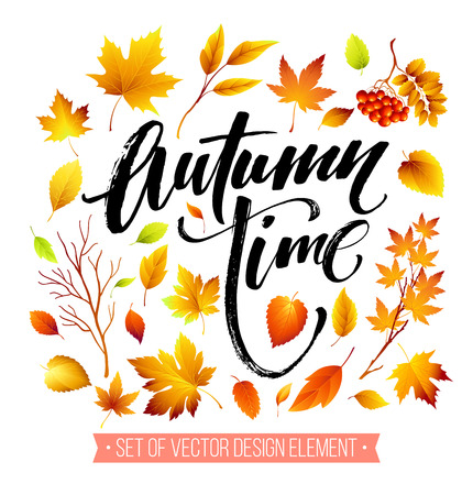 fall leaves on white: Color autumn leaves on white background. Fall leaf set. Vector illustration EPS10
