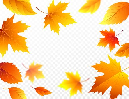 Autumn falling leaves on transparent checkered background.