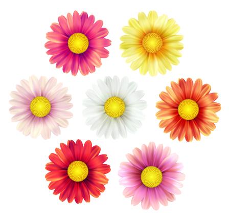 Big set of beautiful colorful spring daisy flowers isolated on white background. Vector illustration EPS10 Illustration