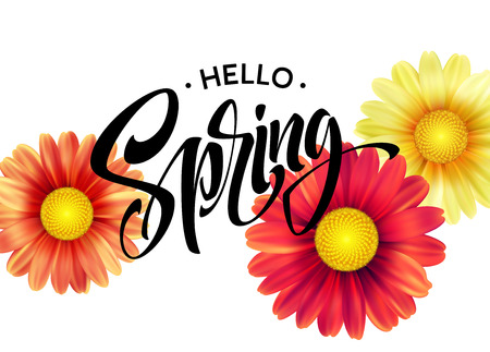 Daisy Flower Background and Hello Spring Lettering. Vector Illustration
