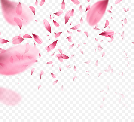Pink sakura falling petals background. Vector illustration