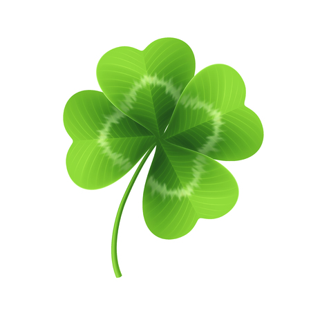 Four leaf clover isolated on white. Vector illustration.
