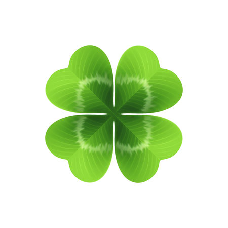 Four leaf clover isolated on white. Vector illustration