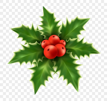 Realistic Christmas holly isolated on background. Vector illustration EPS10