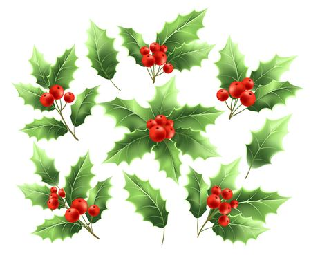 Christmas holly branches