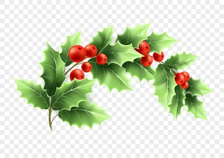 Christmas crescent holly branch illustration. Realistic tree twig with green leaves and red berries on transparent background. Ilex Aquifolium branch. Banner design element. Color isolated vector
