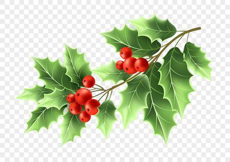 Christmas holly tree branch Stock Photo