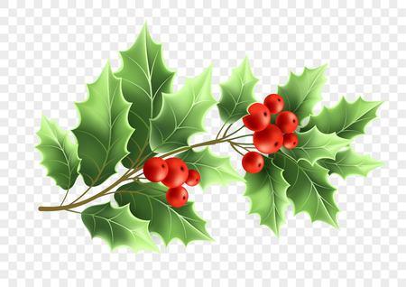 Ilustración realista de rama de árbol de acebo de Navidad