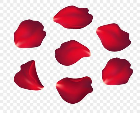 Caída de pétalos de rosas rojas aisladas sobre fondo blanco. Ilustración de vector EPS10