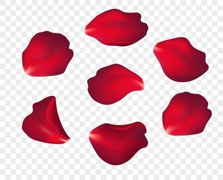Petali di rosa rossa che cadono isolati su priorità bassa bianca. Illustrazione vettoriale Eps10
